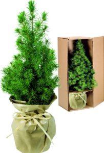 Weihnachtsbäumchen Natur Werbegeschenk Weihnachten
