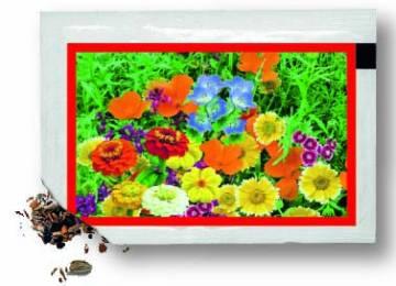 Samentütchen 80x55 mm, bunte Blumenmischung, Standardmotiv, dto
