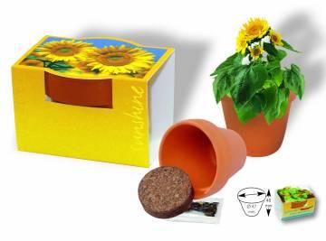Tontöpfchen Sonne mit  Zwergsonnenblume