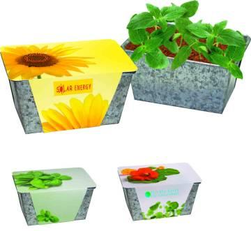 Wachstums-Kästchen Sonne, Zwergsonnenblume, 1-4 c Digitaldruck i