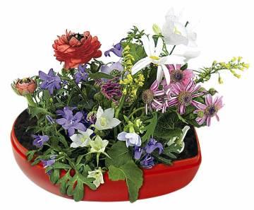 Blumen-Herz, Blumenmischung
