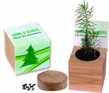 Naturwürfel -Buche mit Samen Fichte