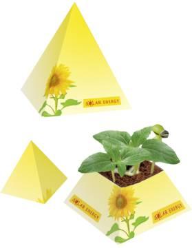 Wachstums-Pyramide, Zwergsonnenblume, 1-4 c Digitaldruck inklusi