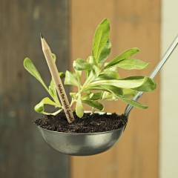 Sprout Bleistift mit Samen Kapsel