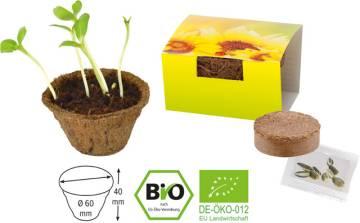 Kleiner Kokos Topf Bio Sonne
